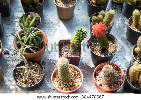 beautiful cactus pots on the tray