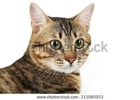 Beautiful cat on white background