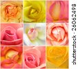 Beautiful collage of roses from nine photos - stock photo