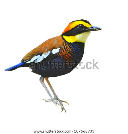 Birds with Fan-shaped Tail - identify birds bird