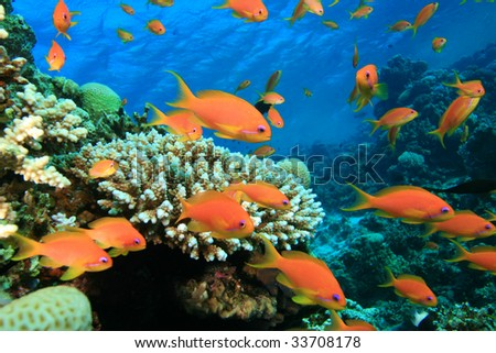 Beautiful Colorful Coral Reefs And Fish Underwater World Red S...