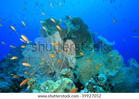 Beautiful Coral Reef - at risk due to global warming