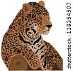 Beautiful feline illustration. Jaguar (Panthera onca). Raster version - stock vector