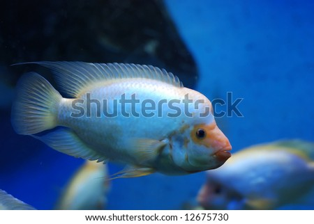 Beautiful  fish near the corals in the deep sea