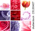 beautiful flowers collage of nine photos - stock