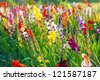 beautiful flowers in the meadow - stock photo
