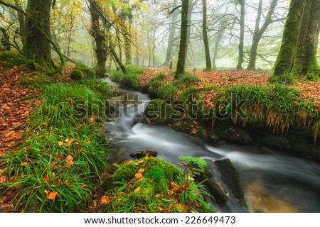 Beautiful forest stream flowing through misty Autumn trees at Golitha Falls on the edge of Bodmin Moor in Cornwall