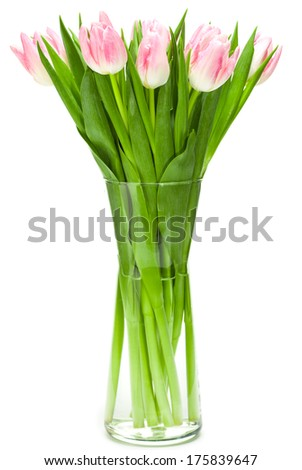 Beautiful fresh pink tulips with white background