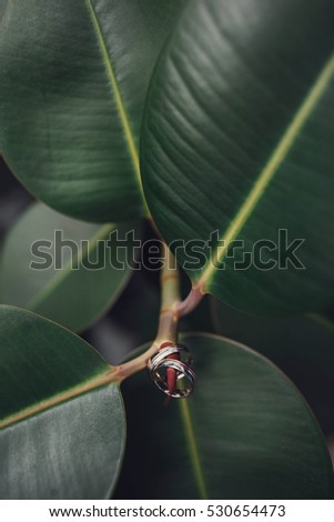 beautiful gold wedding rings hanging on stem of ficus