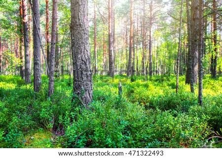 Beautiful green deep forest