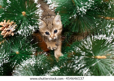 Beautiful kitten playing with green fir tree