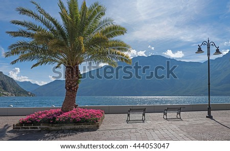 beautiful lakeside promenade with palm tree and flowerbed, limone sul garda, italy