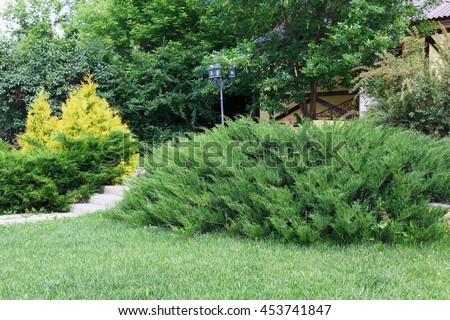 Beautiful landscape design, garden with evergreen bushes, fir trees, spruces and shrubs in sunlight. Modern landscaping. Summer garden or park design.