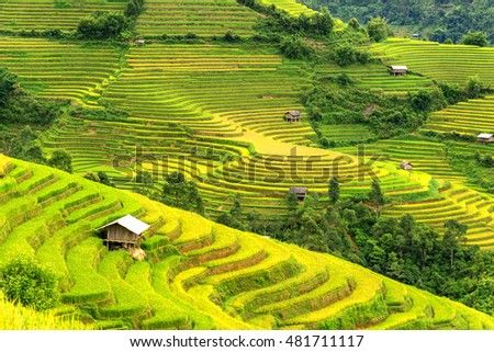 beautiful landscape view of rice terraces and house at Sapa in northern Vietnam