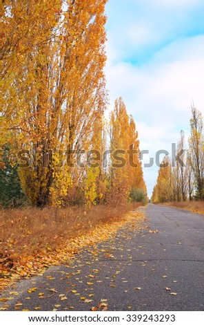 Beautiful landscape with poplar trees, golden leafs and road at fall.