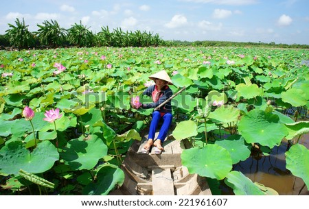 Beautiful landscaping of Vietnamese village  woman rowing the row boat to  pick lotus flower on. Beautiful Landscaping Vietnamese Village Woman Rowing Stock Photo