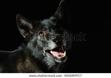 beautiful lowkey wolfshound