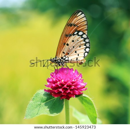 Beautiful Monarch butterfly on green nature background