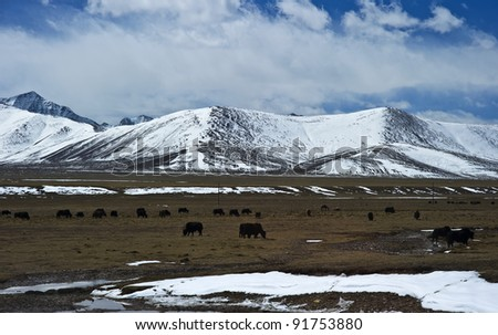 beautiful mountain view covered by heavy snow with blue sky and white cloud in tibet China