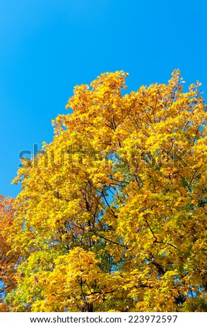 Beautiful multicolor trees with yellow and red foliage of Indian summer against blue sky background. Moscow, Russia.