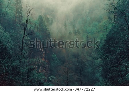 Beautiful mystical landscape. Fog in the forest, dark color. Mist among woods