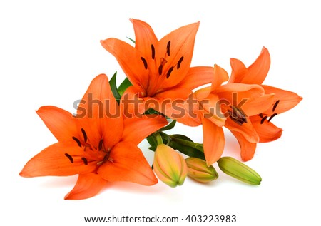 Beautiful orange lily flower bouquet isolated on white background