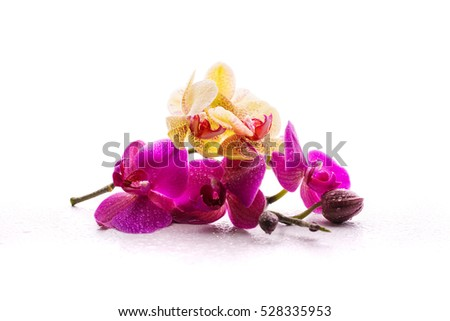 beautiful orchid on a white background
