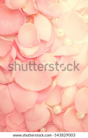 Beautiful Pink Rose Pearls Stock Photo 456852967 ...