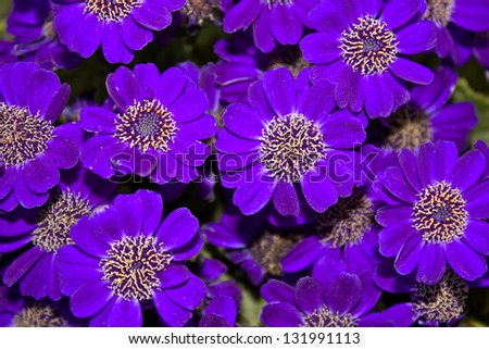 Beautiful Purple Flowers Best Focus On The Right Middle Flower