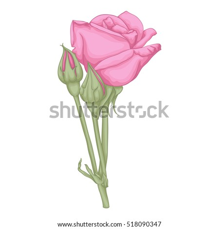 beautiful red rose isolated on white background. for greeting cards and invitations of the wedding, birthday, Valentine's Day, mother's day and other seasonal holidays