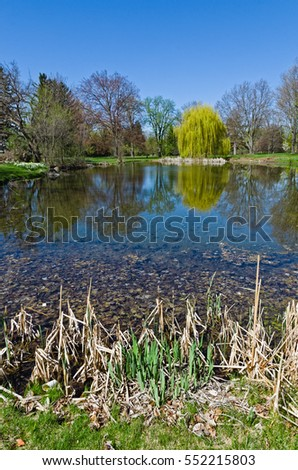 Beautiful Scenic with Trees and Pond in Spring