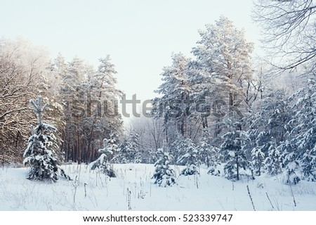 Beautiful snow-covered forest. Winter is coming. Snow and blowing snow in the park. New Years is soon. Firs, snow in coniferous forest, a lot of snow