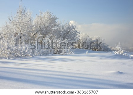 beautiful snowy winter landscape
