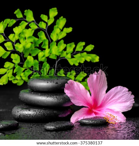 beautiful spa concept of pink hibiscus flower, fern branch and stones pyramid with drops, closeup