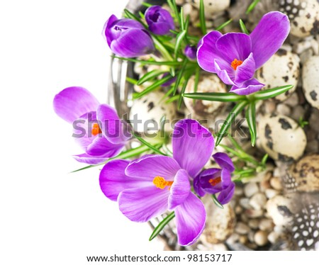 beautiful spring crocus flowers in basket with easter eggs decoration over white background