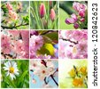 Beautiful spring flowers collage, nine photos - stock photo
