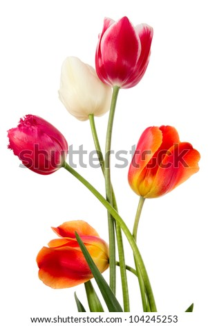 Beautiful spring flowers on a white backgrounds