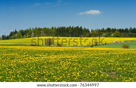 Beautiful spring shot with a dandelion meadow