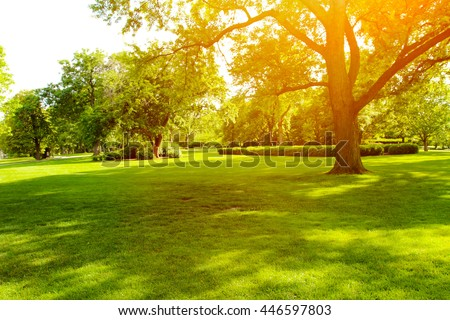 Beautiful summer landscape with trees and green grass