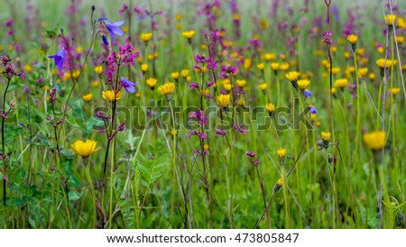 Beautiful summer wildflowers