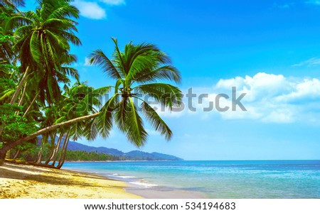 Beautiful sunny beach. View of nice tropical beach with palms around. Holiday and Vacation concept