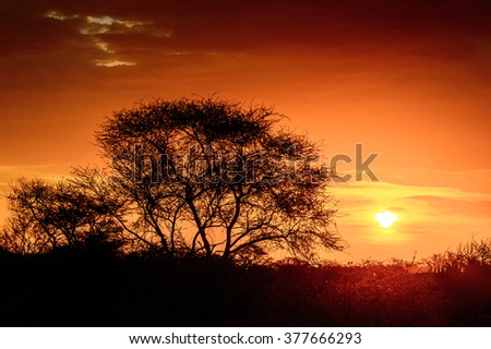 Beautiful sunset  at the Erindi Private Game Reserve, Namibia