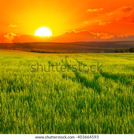 Beautiful sunset on wheat field