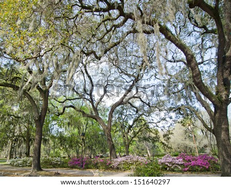 Beautiful trees and gardens are found in Forsyth Park in central Savannah, Georgia in early spring.