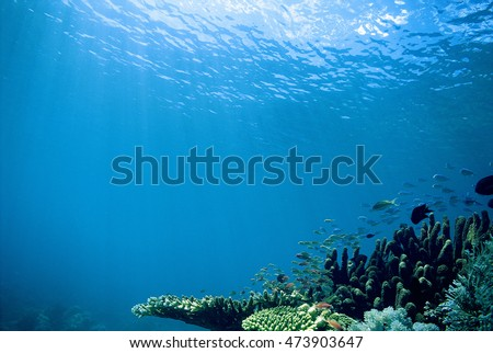 Beautiful under the sea