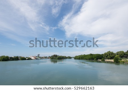 Beautiful vibrant mangrove forest in Thailand with a blue sky in summer