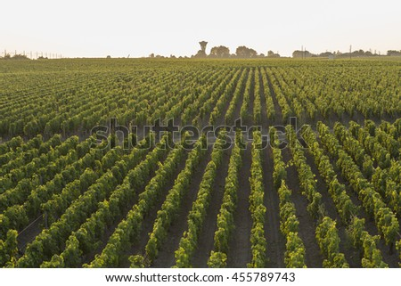 Beautiful Vineyard Rows From Above