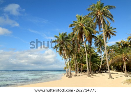 Beautiful white sand beach in Guadeloupe (France), Caribbean Islands