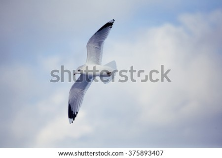 Beautiful white seagull flying in the sky