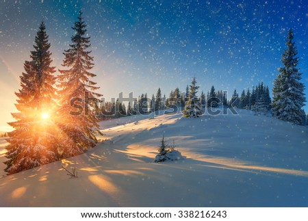 Beautiful winter landscape in mountains. View of snow-covered conifer trees and snow flakes at sunrise. Merry Christmas's or New Year's background.
